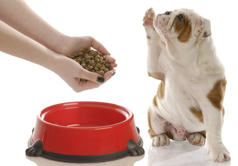 Переход на сухой корм для собак