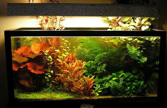 Какой выбрать аквариум для рыбок